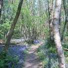 views_wood_4