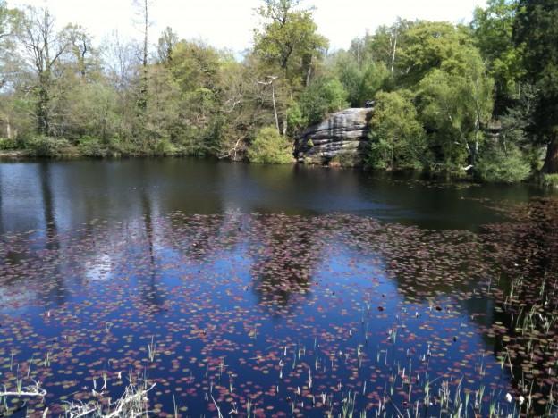 lake_wood