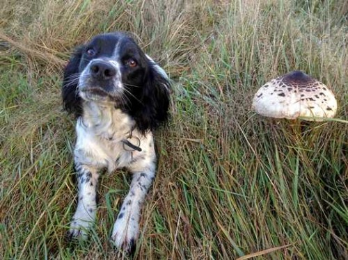 fungi_2_tilly_and_fungus