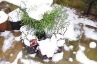 anonymous_gardener_jan2