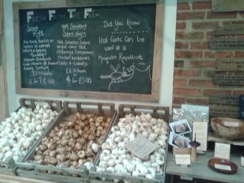 isle of wight garlic 1
