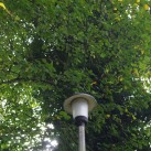 This street light is more easily spotted in Lime Tree Avenue, Uckfield.