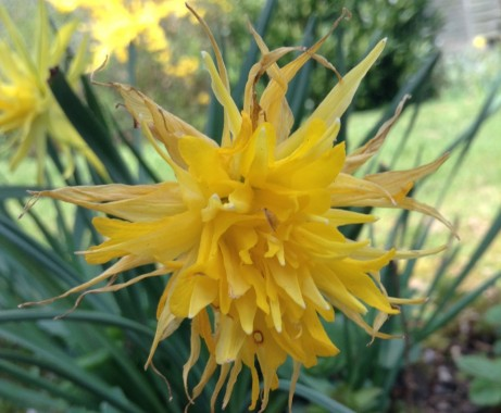 gardening march 7