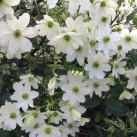 The garden was full of white flowers and green shrubs. Our work has to bring more vivid colours to the garden
