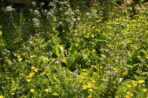 selby_meadow_7