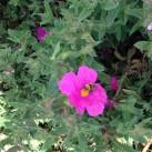 gardening_june3_bee