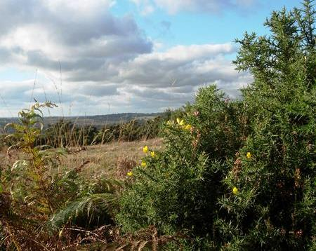 ashdown_forest_3