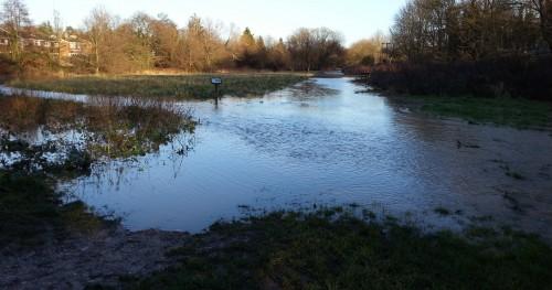 Hempstead Meadows Nature Reserve January 8 2015