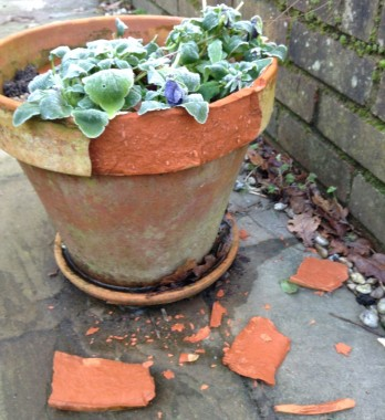 gardening-feb-15-frozen-pot