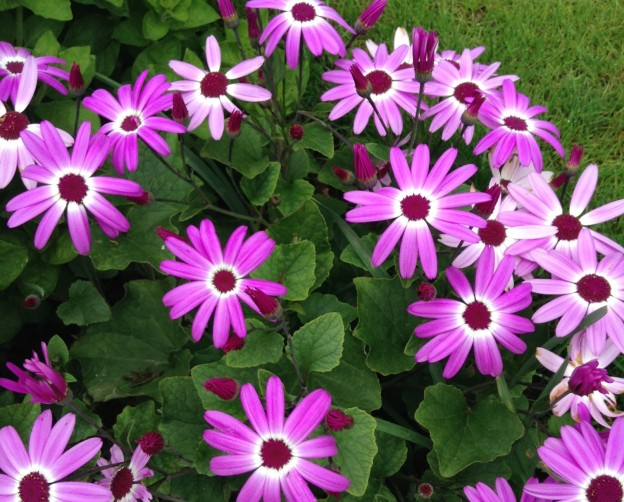 gardening-may-senetti-2