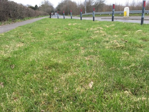 Grass verge on the Eastbourne Road, Uckfield
