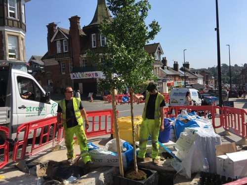 The first tree is planted in Uckfield High Street