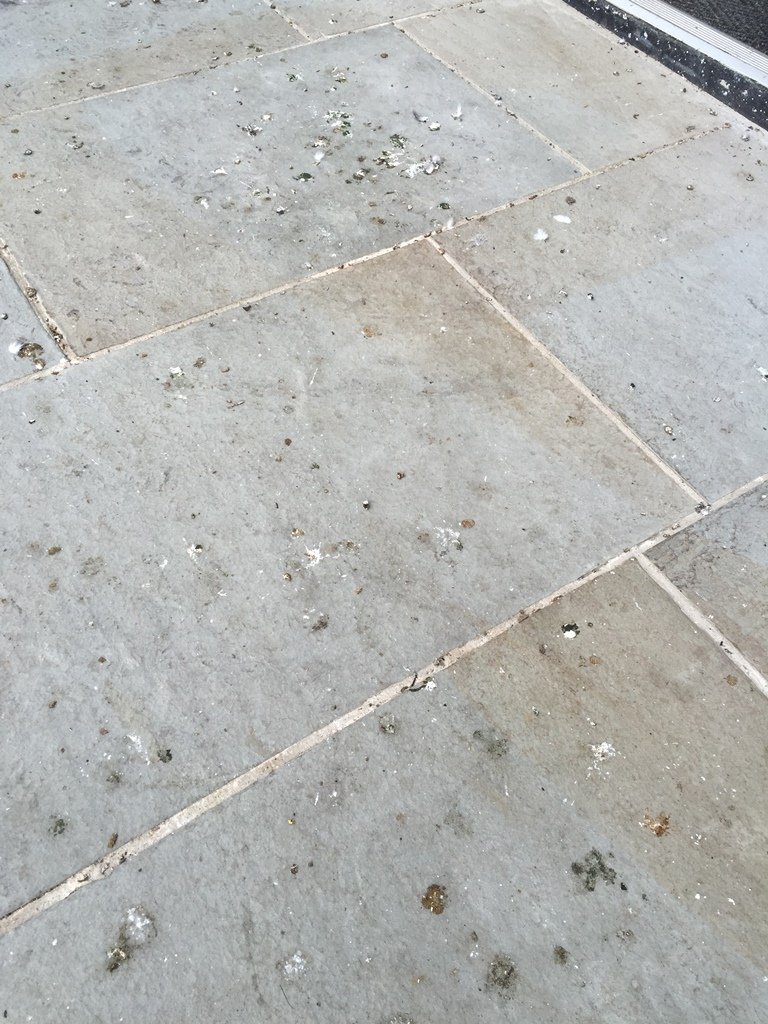 pigeon-droppings-uckfield-high-street