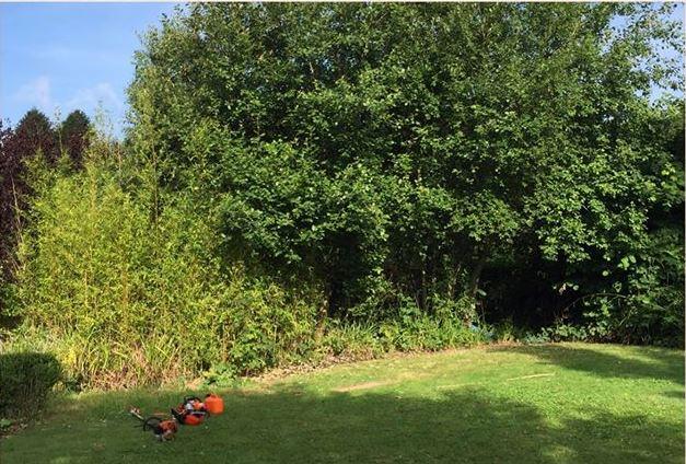 clean-cut-gardening-border-1-before