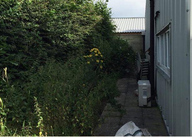 clean-cut-gardening-hedge-1-before