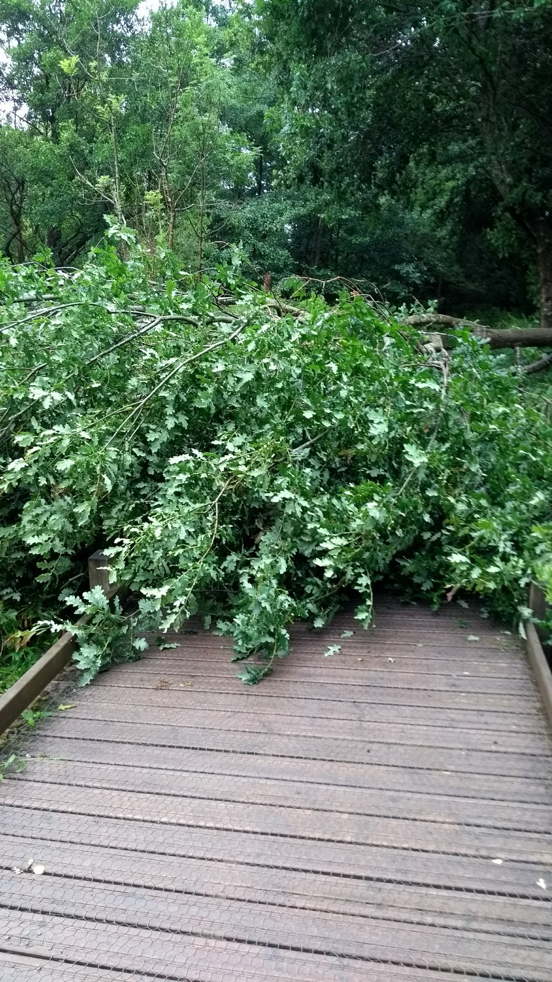 tree-collapse-hempstead-nature-reserve