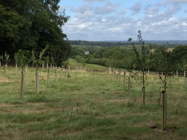 Owlsbury Trad orchard