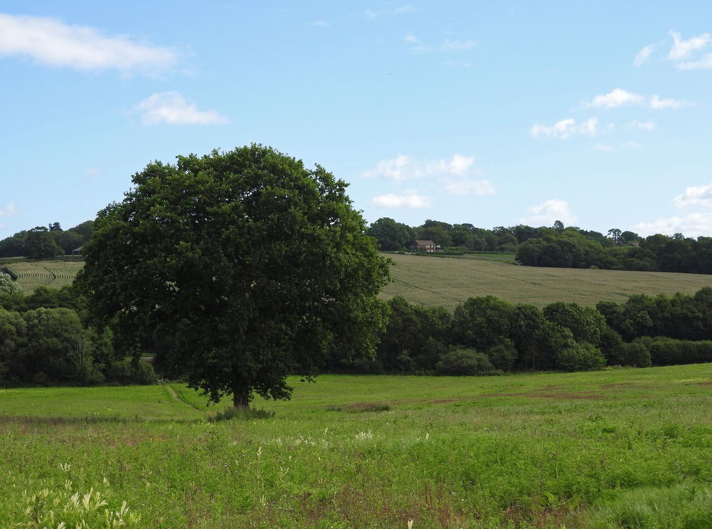 Owlsbury Tree & Distance