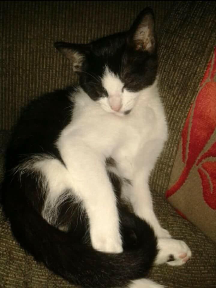 missing-poppy-cat