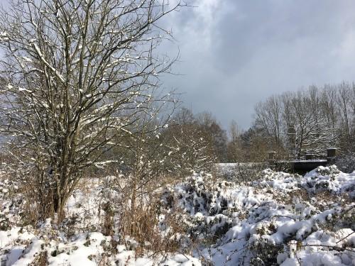 Hempstead Meadows LNR 4