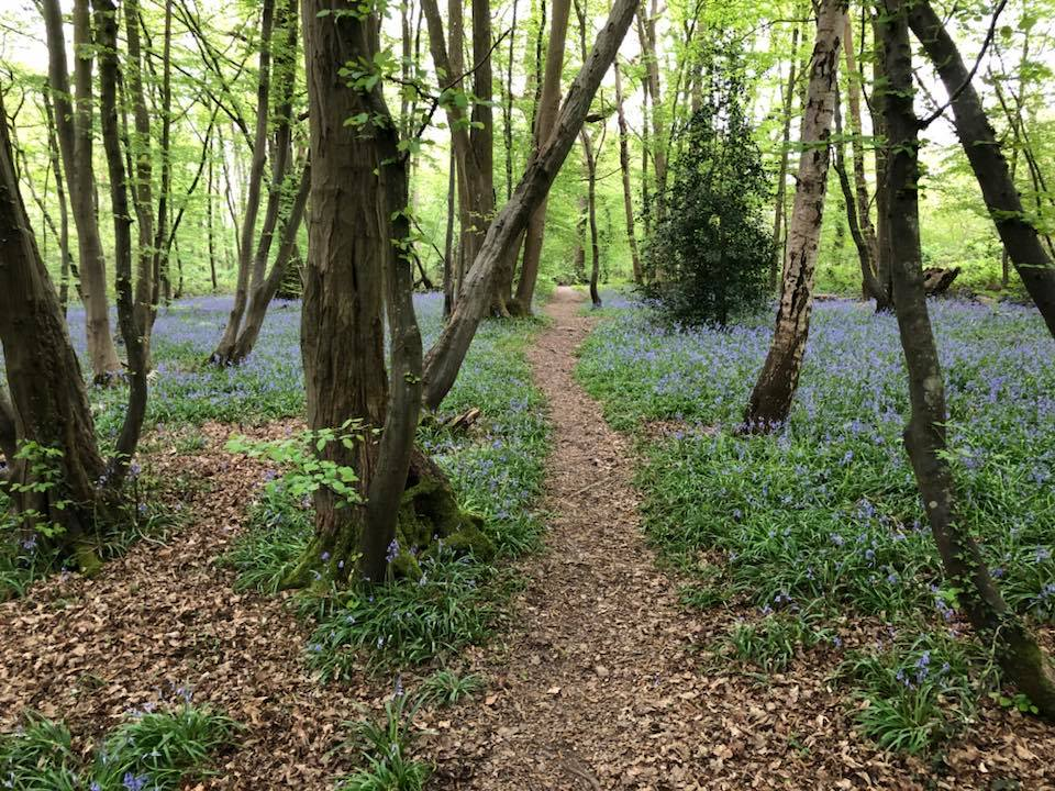 bluebells-boothland-wood-2