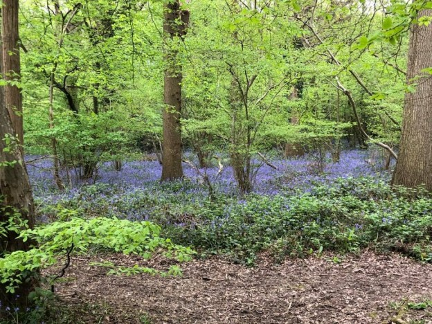bluebells-boothland-wood-5