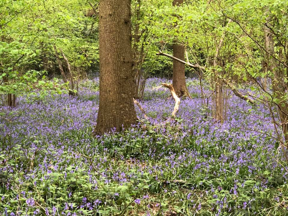 bluebells-boothland-wood-6