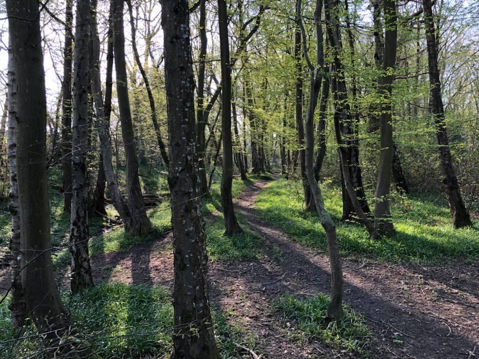 bluebells-boothland-wood-7
