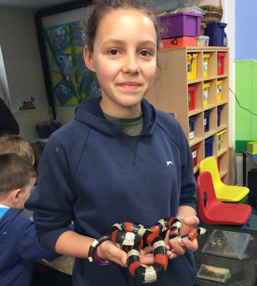 framfield-fair-puablan-milk-snake