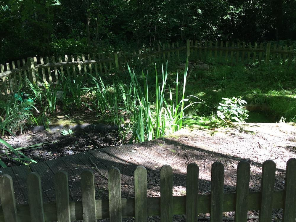 slm-toyota-rocks-park-pond-before