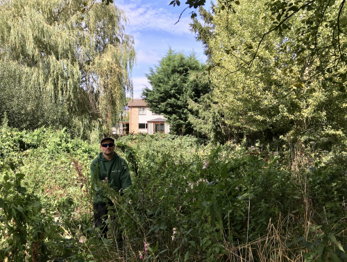 Geoff Pollard pulling Himalayan Balsam In the Hempstead Meadow Local Nature Reserve