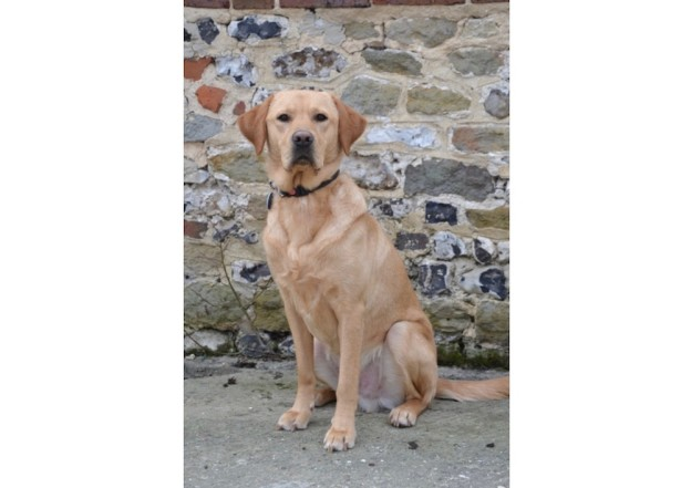 uckfield-lions-rory-canine-partner