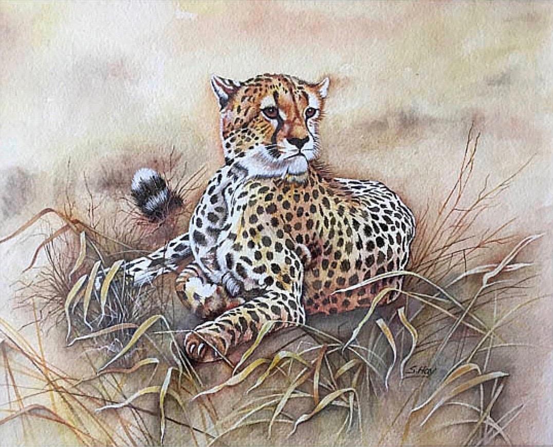 sheila-hay-cheetah