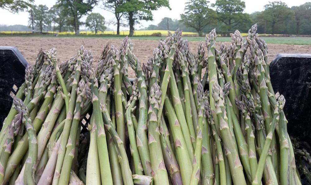south-brockwells-farm-asparagus