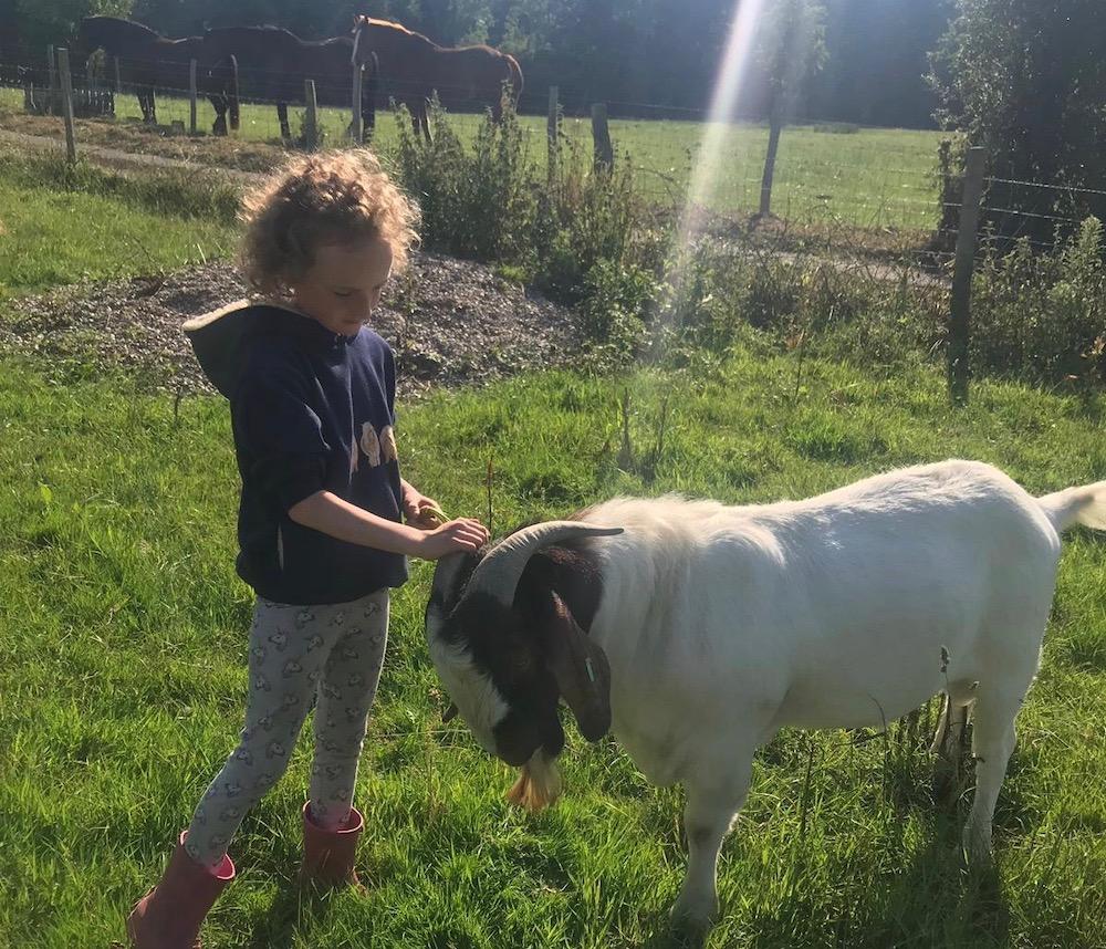 south-brockwells-farm-daisy-and-filippo-goat