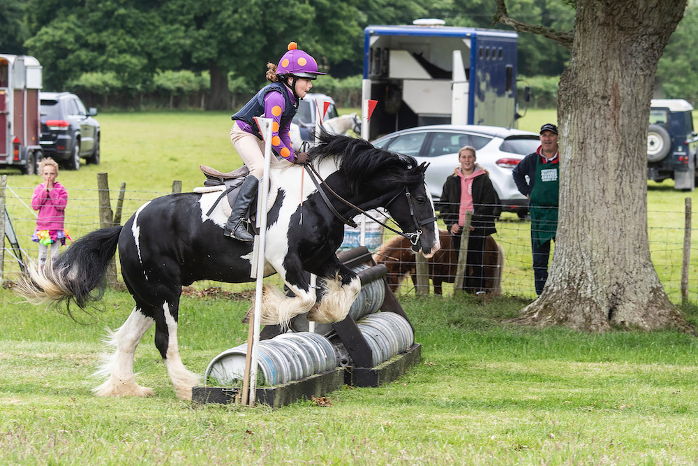 south-brockwells-farm-horses