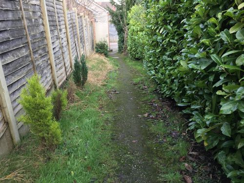 A path leads between a boarded fence on one side and a laurel hedge on the other