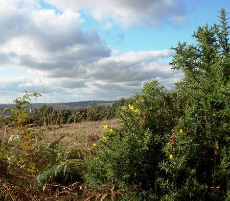 A view of the Ashdown Forest.